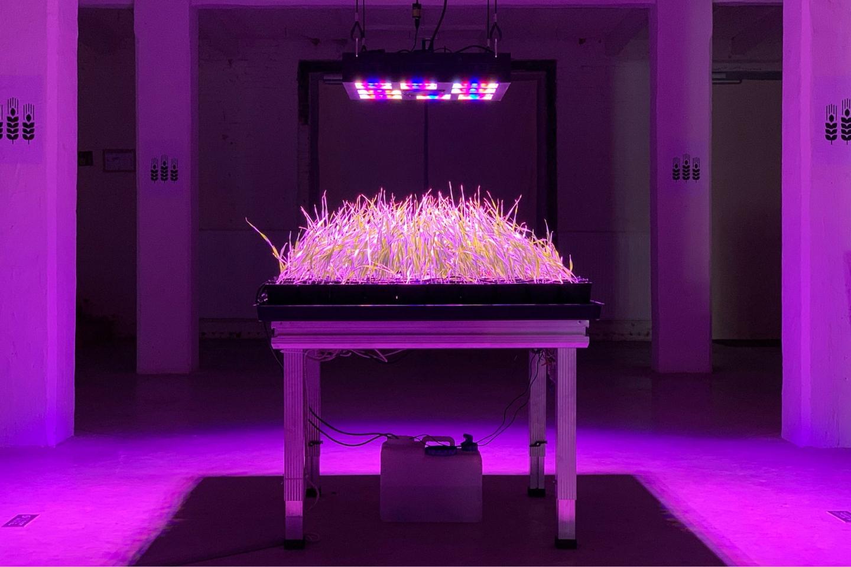 Solar Share (The Farm)